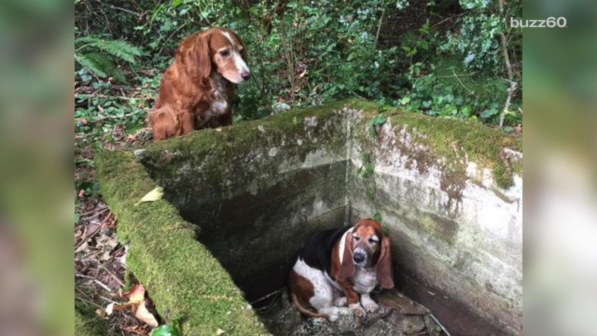 This Dog Stood Guard for Nearly a Week to Protect Its Friend Who Got Trapped in a Ravine