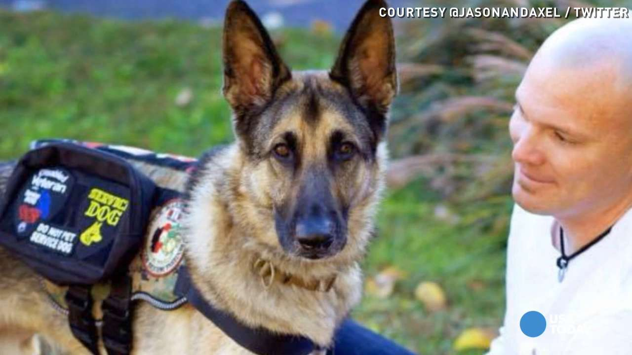 Vet says service dog not allowed on American Airlines flight