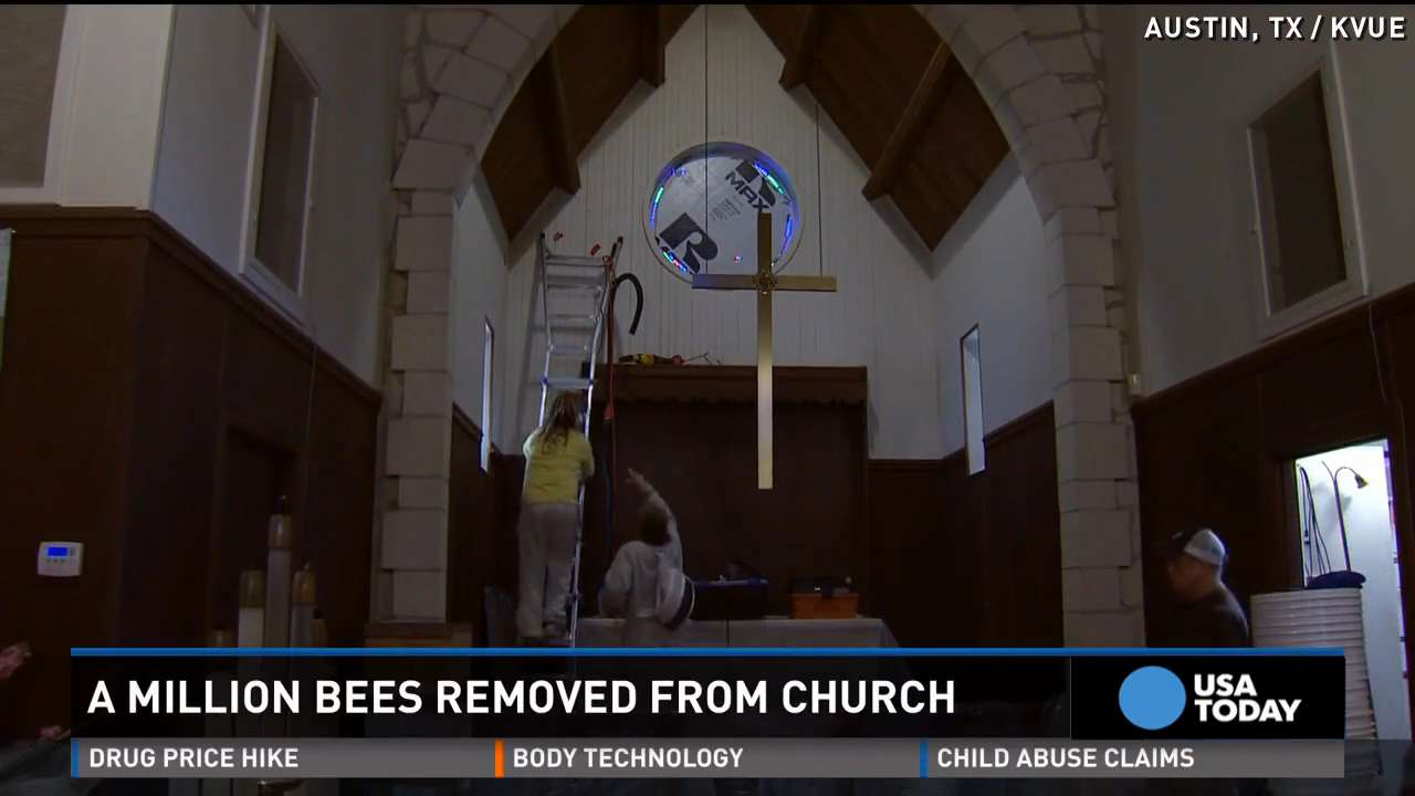 1 million bees removed from inside church walls