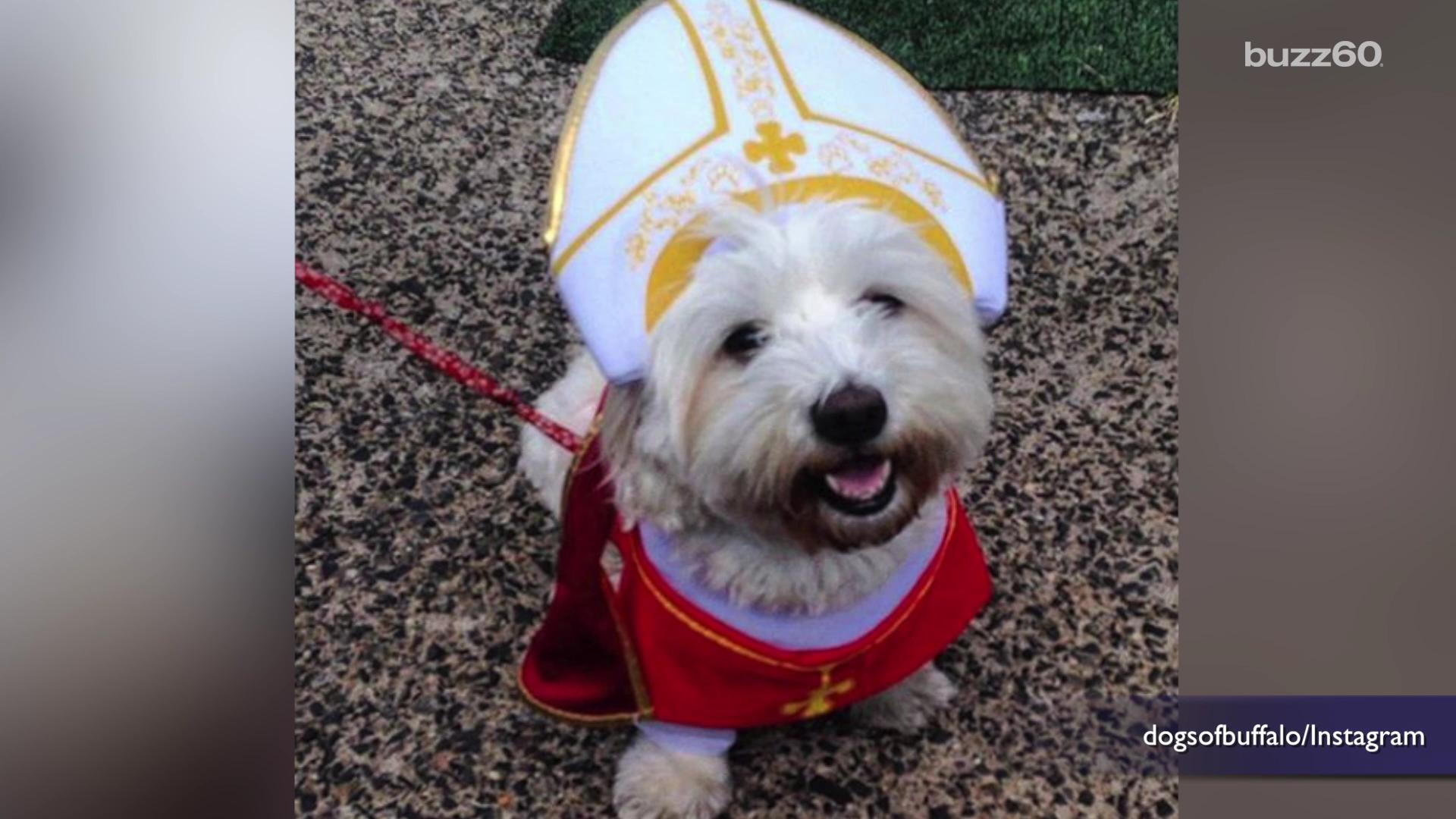 #PopeDog may be one of the best things about the Papal visit
