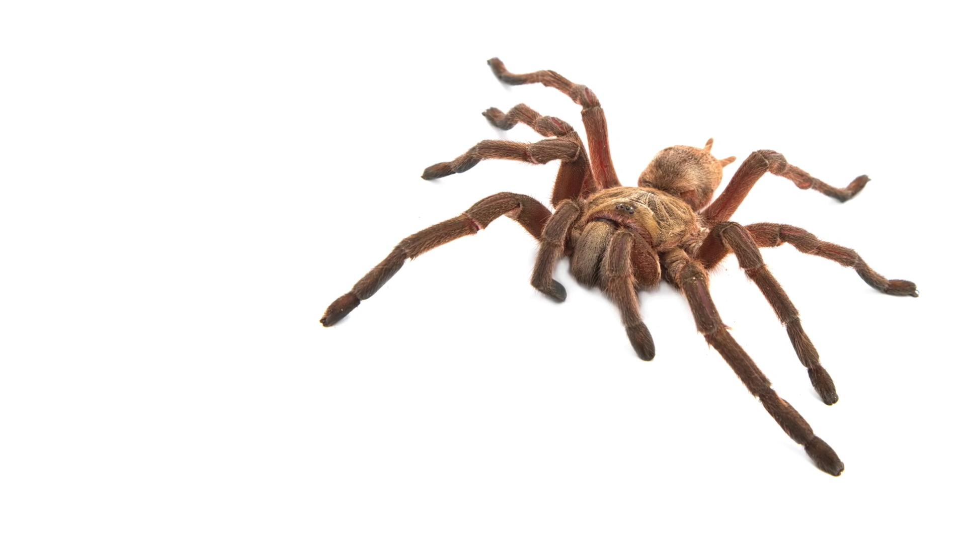 Escaped tarantula causes three hour plane delay