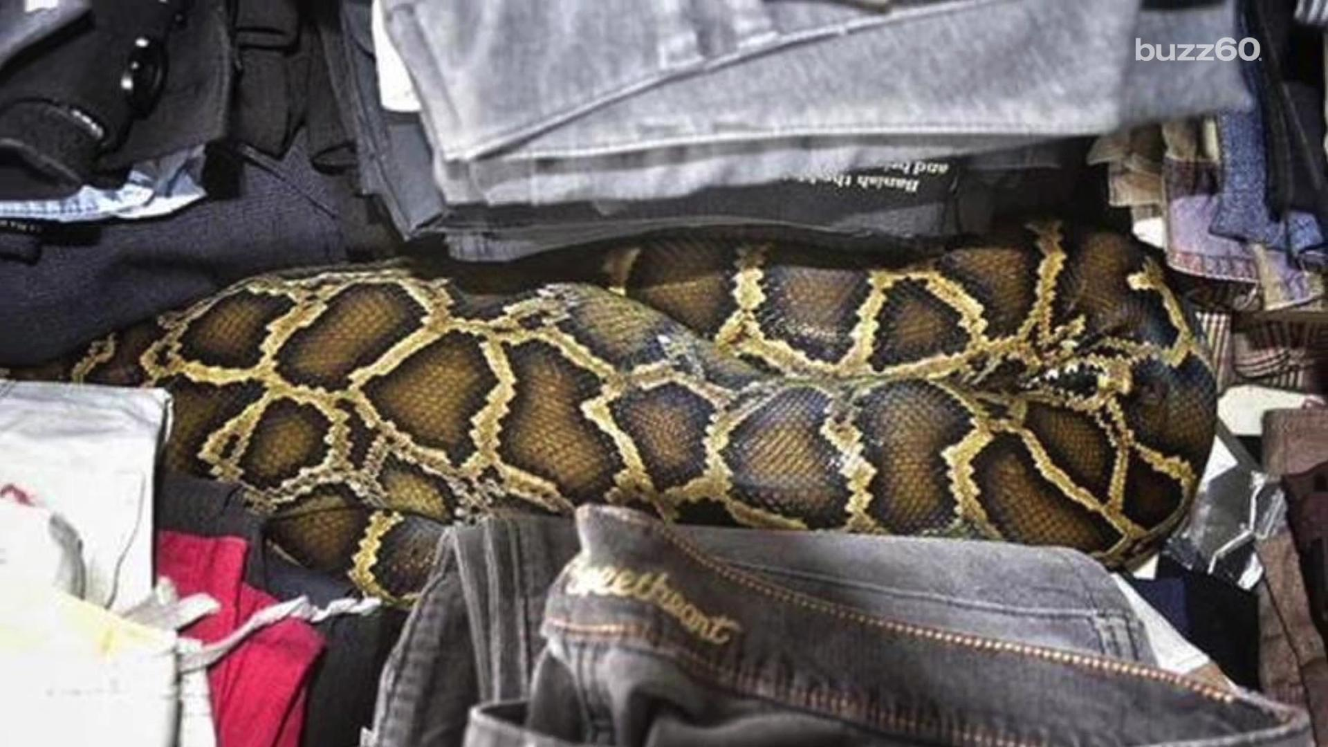 8-foot snake found hidden in clothes at flea market
