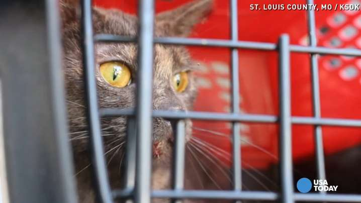 150 cats seized from couple's home