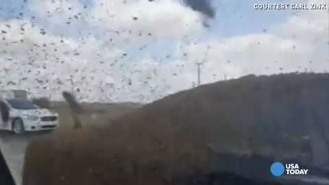 More than a million bees escape in wreck