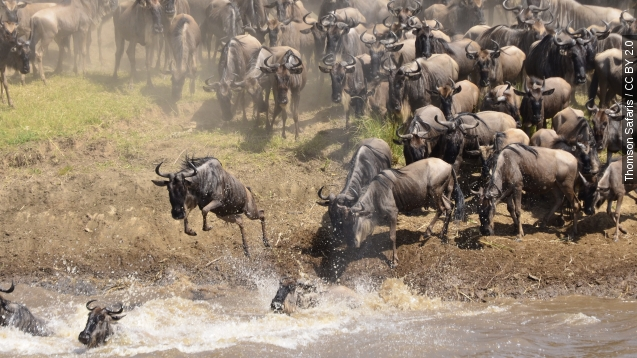 You can now stream one of Earth's most impressive migrations