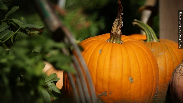 America, we might have A pumpkin problem