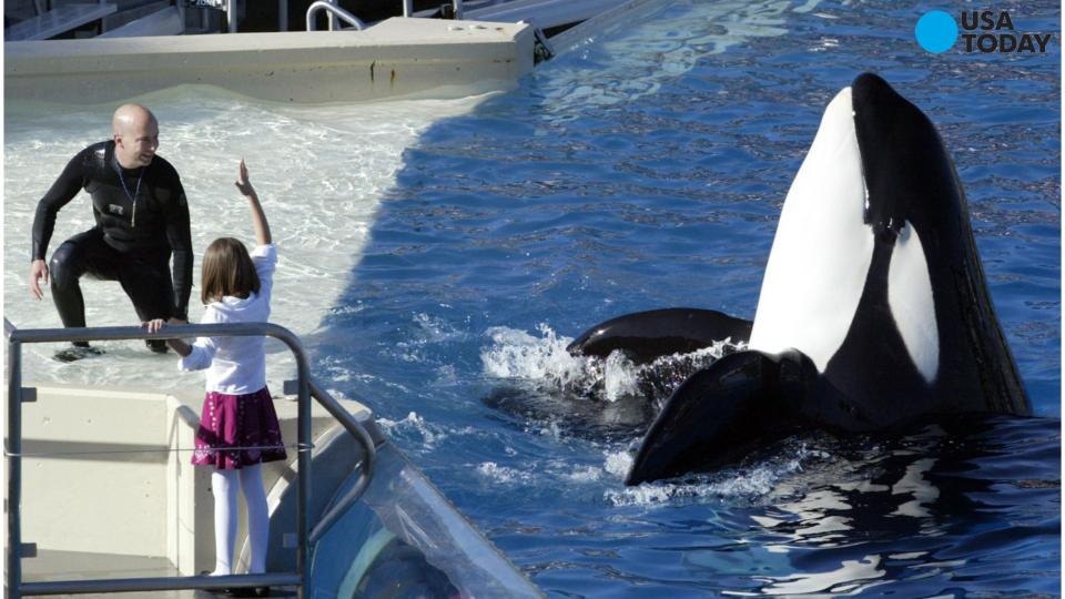 SeaWorld Orca tank expansion approved