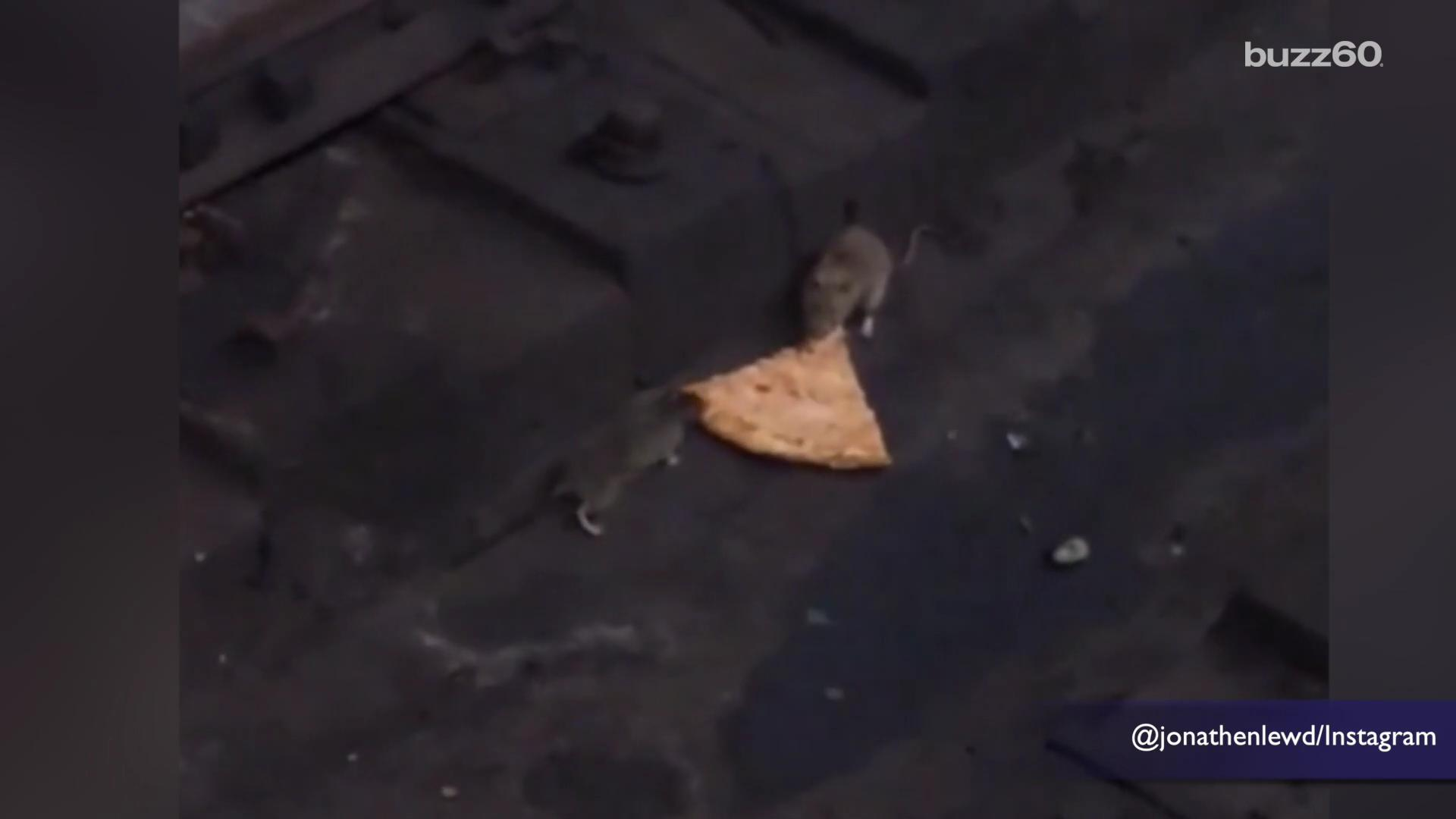Pizza rat returns with video of 2 rats fighting over a slice