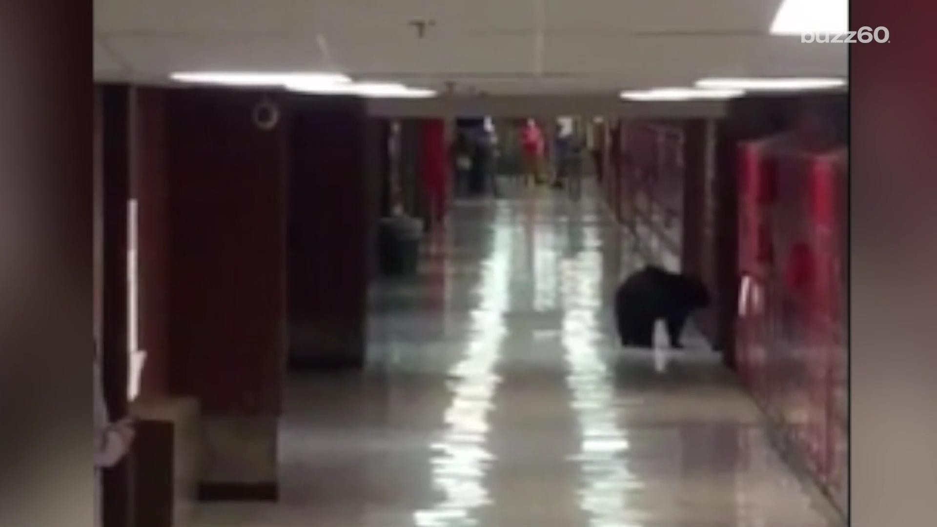 Black bear strolls through Montana high school during class