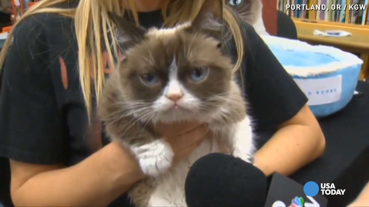 While in Portland, Oregon for another dreadful event for her new book 'Grumpy Cat: No-It-All: Everything You Need to No,' the famous feline made it very clear she couldn't care less about the entire situation.