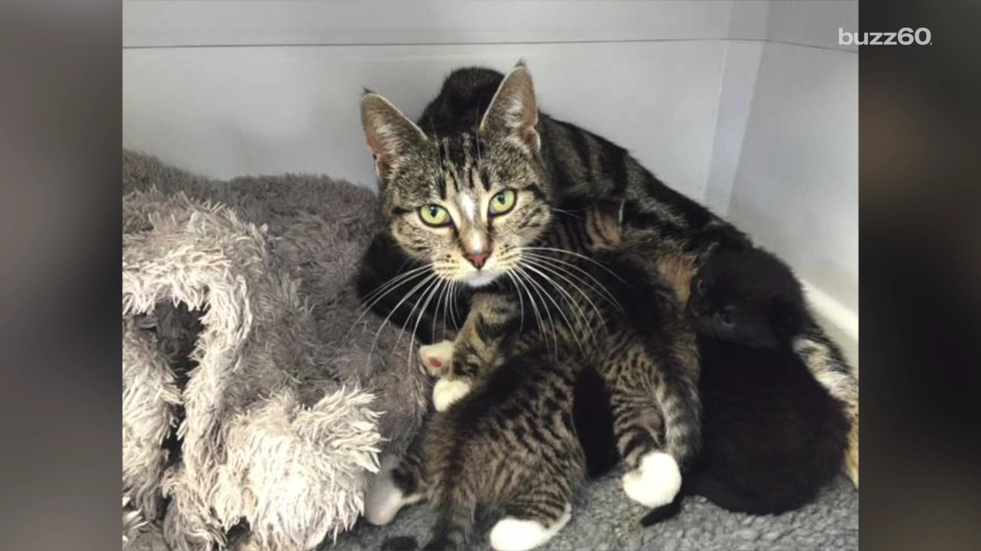 Mother cat breaks into vet clinic to be with her abandoned kittens