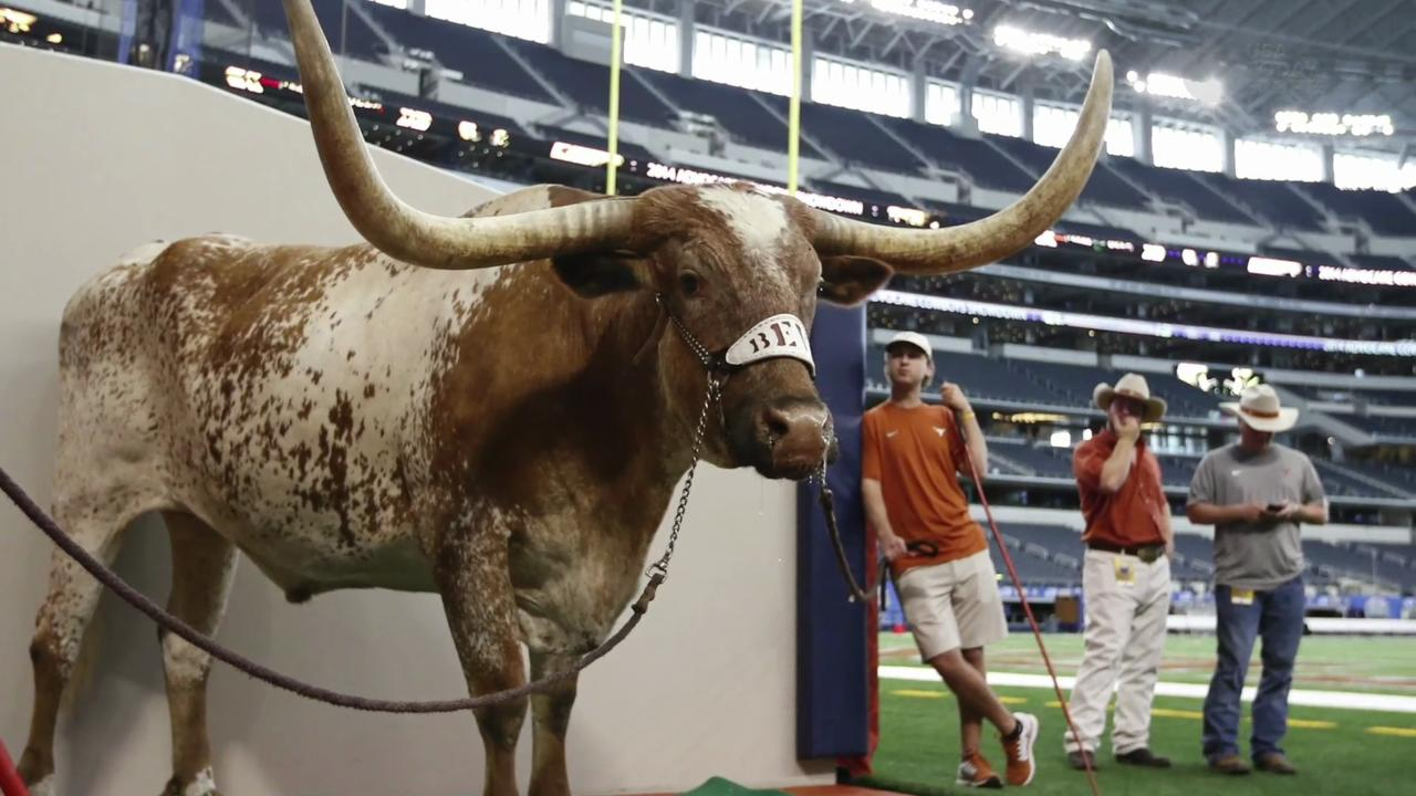 Remembering beloved Texas mascot Bevo XIV