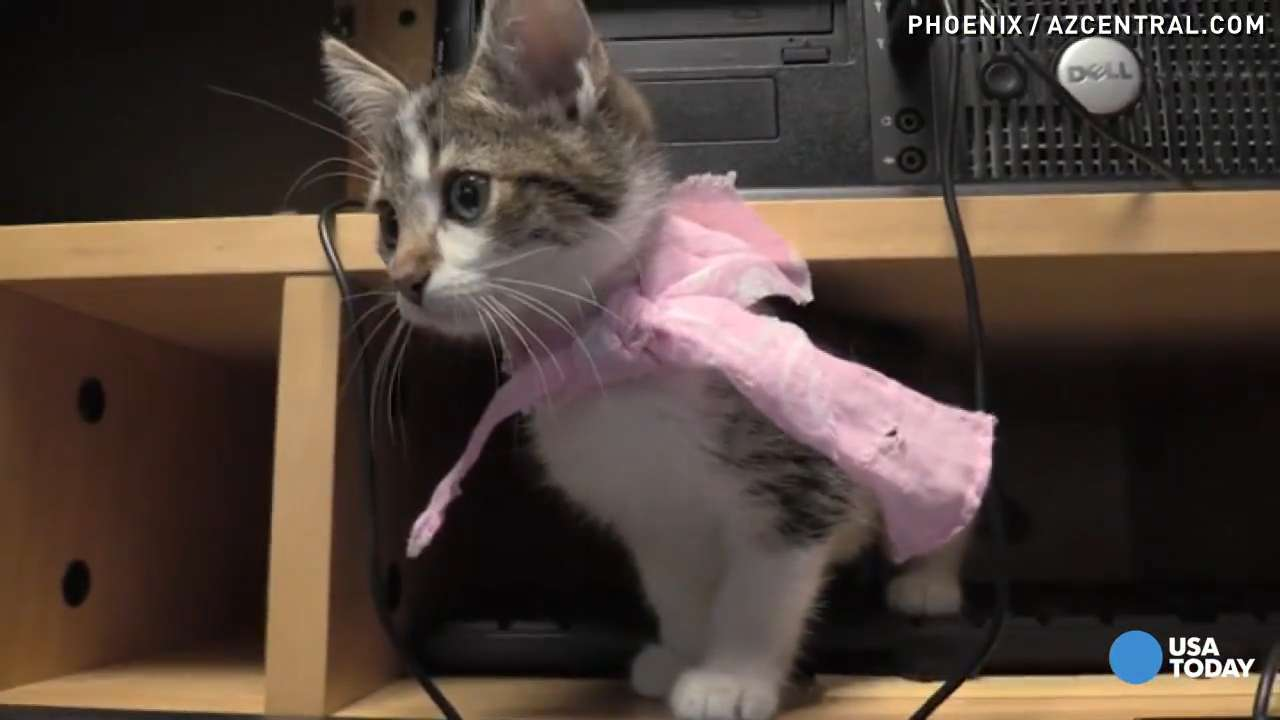 Need a kitty fix? Uber is delivering kittens for National Cat Day to animal lovers in more than 50 cities. All cats are adoptable and the money goes to a local shelter.