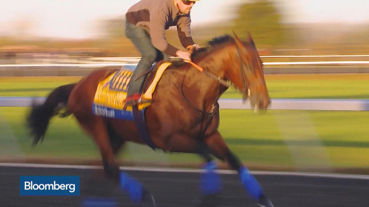 Bloomberg's David Gura reports on American Pharoah's retirement plan after he races in the Breeders' Cup Classic.