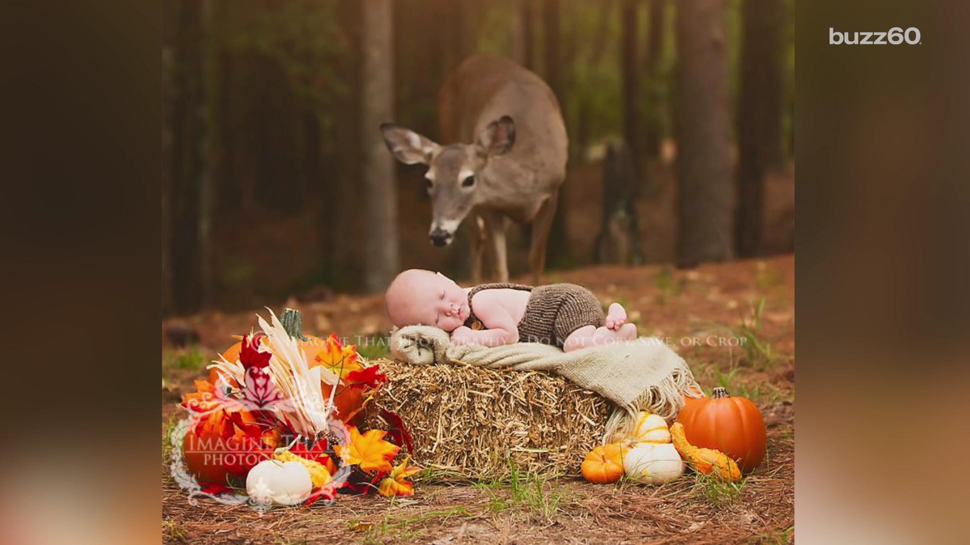 Deer photobombs newborn's forest photo shoot