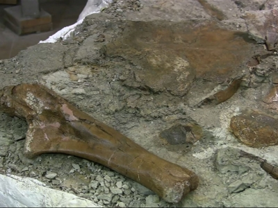 Huge dinosaur fossil airlifted to New Mexico museum