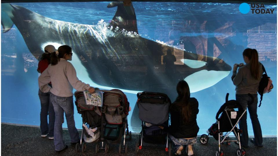 SeaWorld San Diego to drop killer whale show