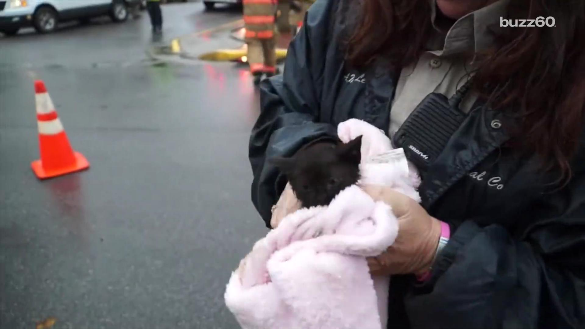 Kids assistance firemen save darling kitten from charge drain