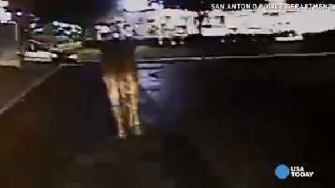 Caught on camera: Fugitive cow leads cops on wild chase