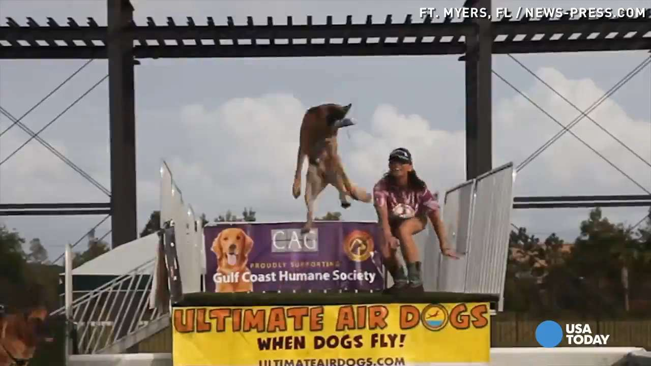 Get a feel for what it is like to fly through the air with members of the Ultimate Air Dogs. A GoPro even lets you ride on the back of a couple of the dogs as they launch off the dock!