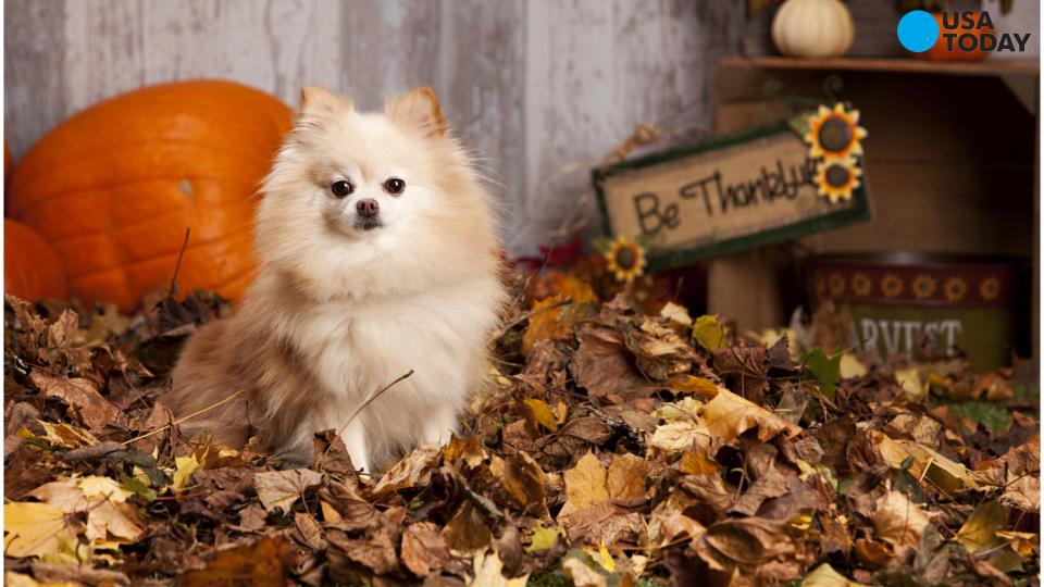 Keep these 4 Thanksgiving foods away from your pets