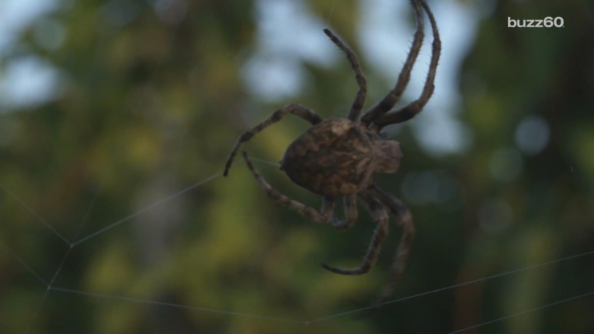Man screaming at a spider prompts reports of domestic violence
