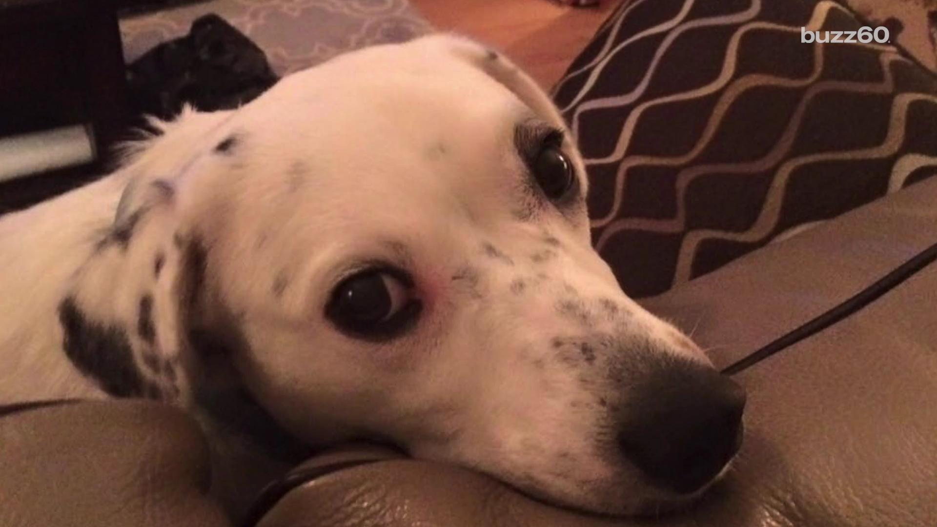 Dog returned for being overly affectionate finds forever home