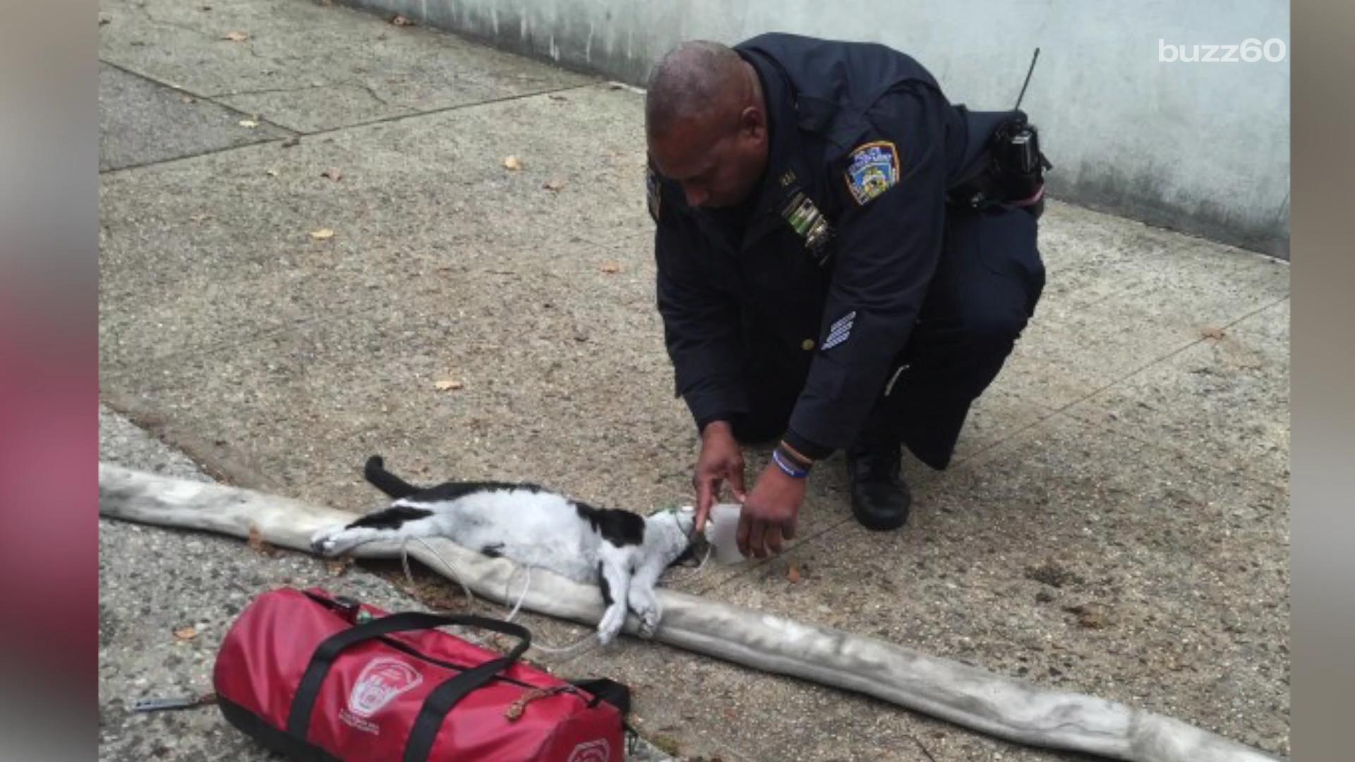 Cats get CPR after being rescued from house fire