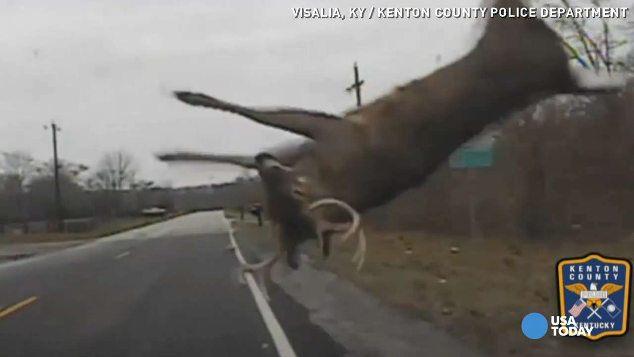Dashcam video from a police cruiser in Kenton County, Kentucky shows a large deer colliding with the car, flipping in air before running into the woods.