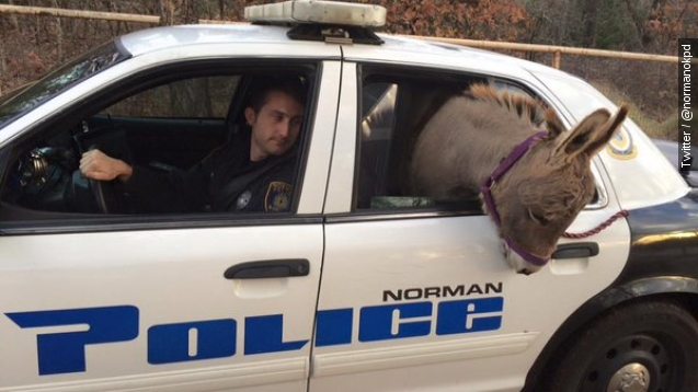 Officer lets lost donkey hitch ride in his car