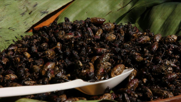 Spiders, snails on the menu in return to slow food