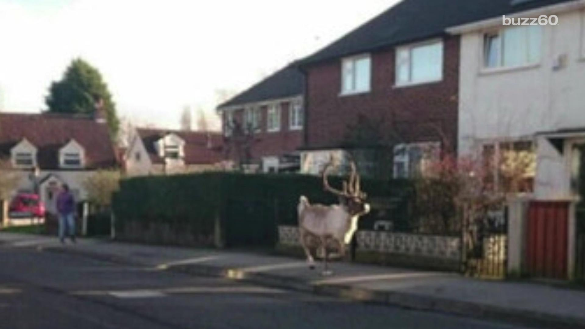 Santa loses one of his reindeer, causing chaos in the streets