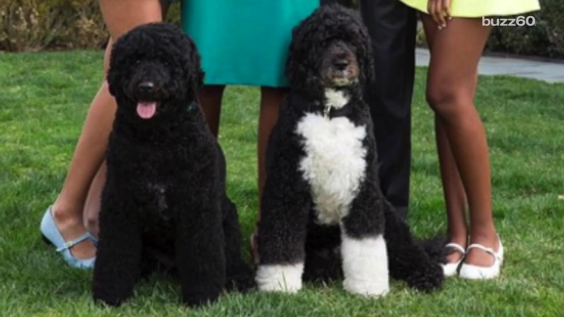 What Was President Obama S Dog