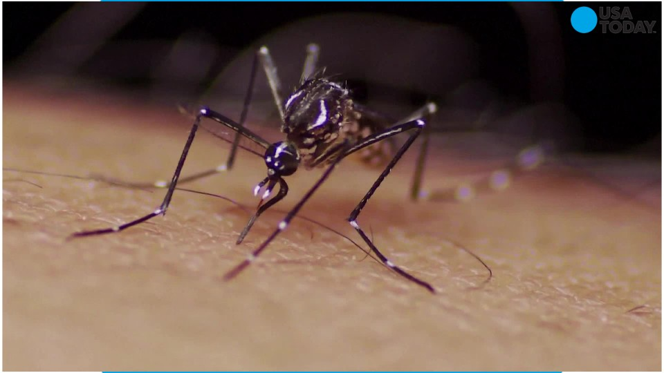 Mosquitoes are spreading a rare virus