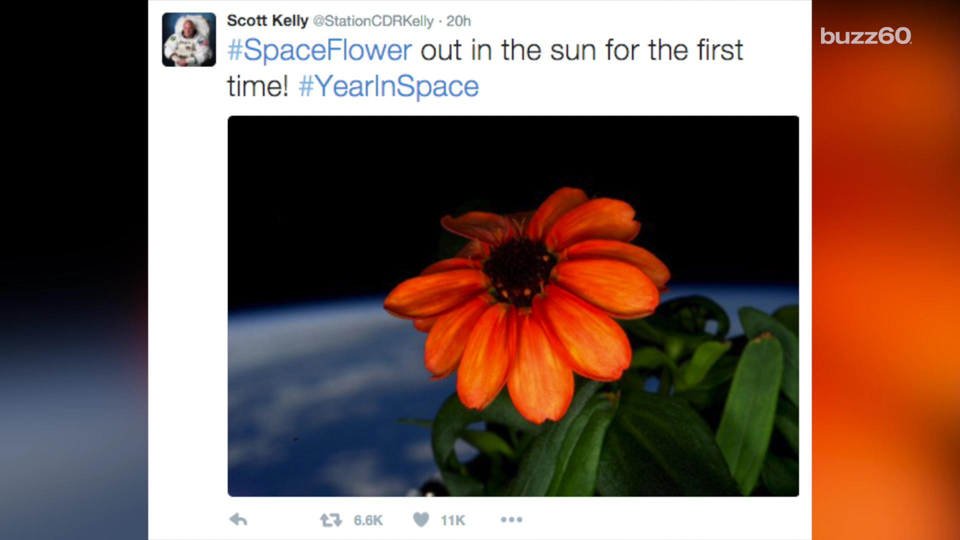 Space just got sweeter as first flower bloom aboard the ISS