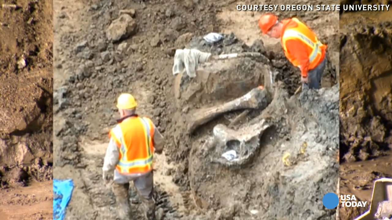 10,000-year-old mammoth remains found below stadium