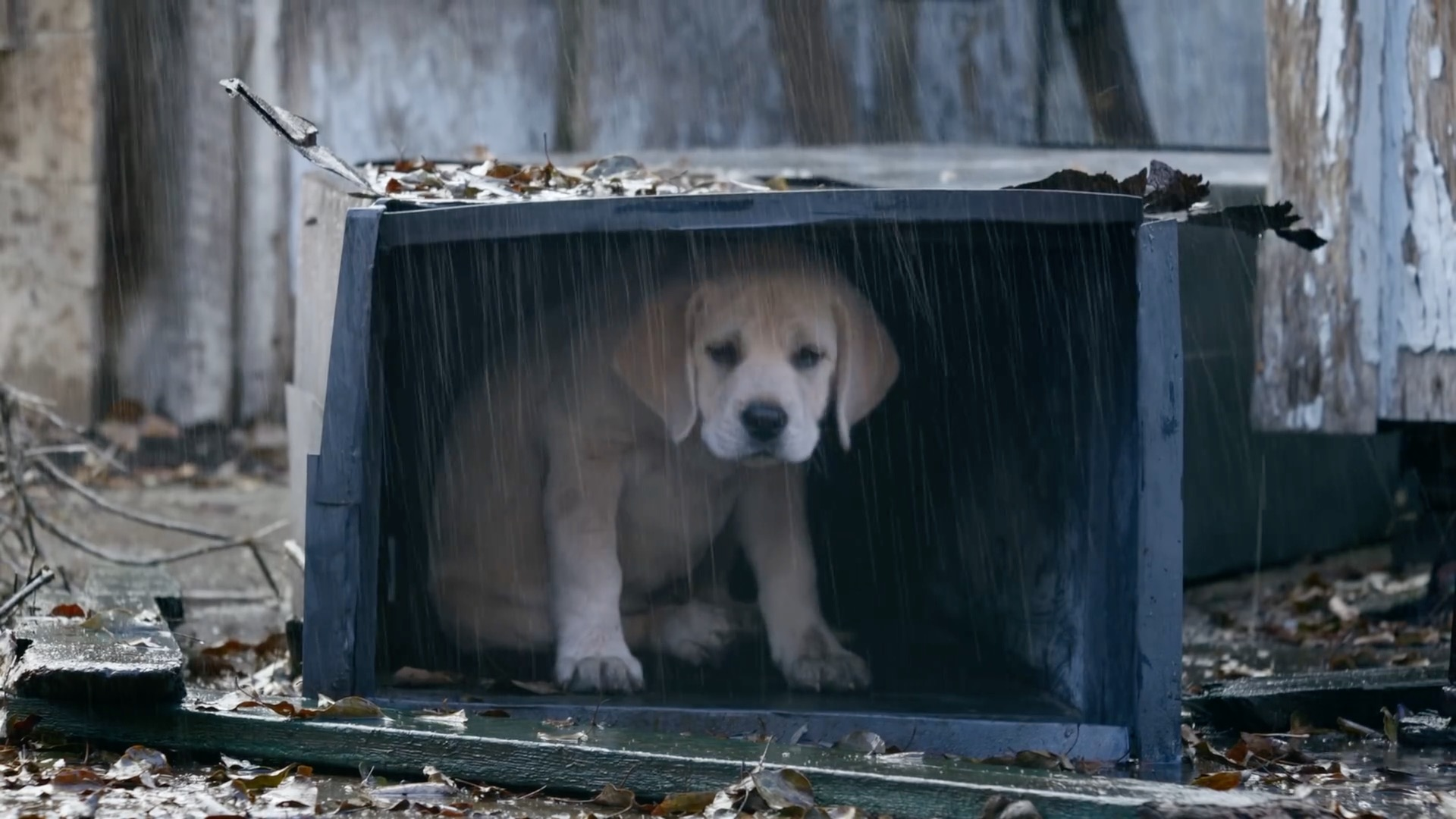 Top 5 Super Bowl commercials of 2015