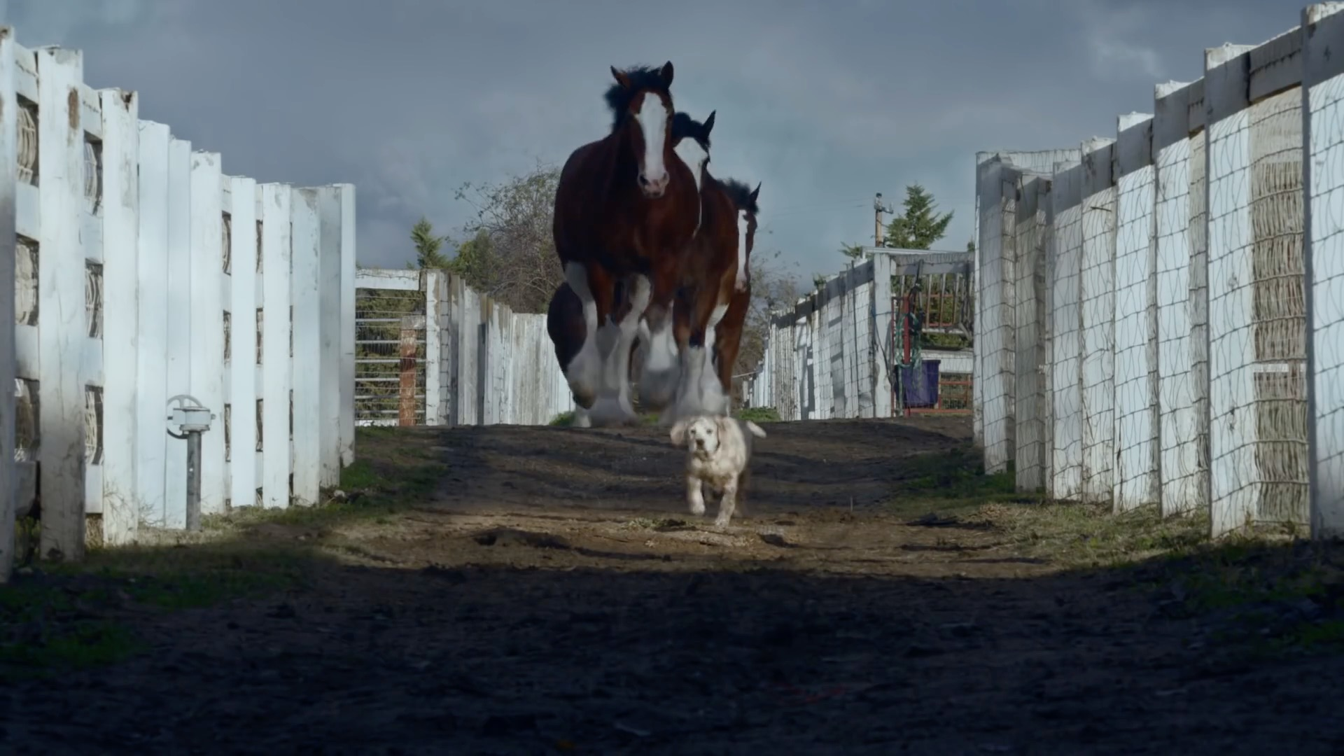 Best of: Super Bowl ads you want to watch over and over