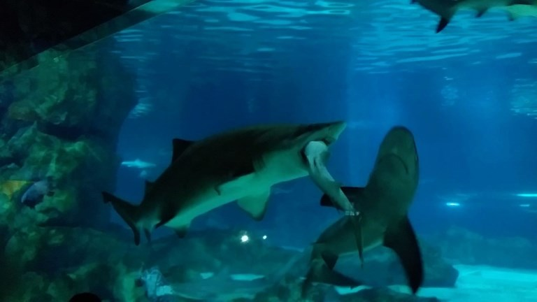 Shark swallows another shark in Seoul aquarium