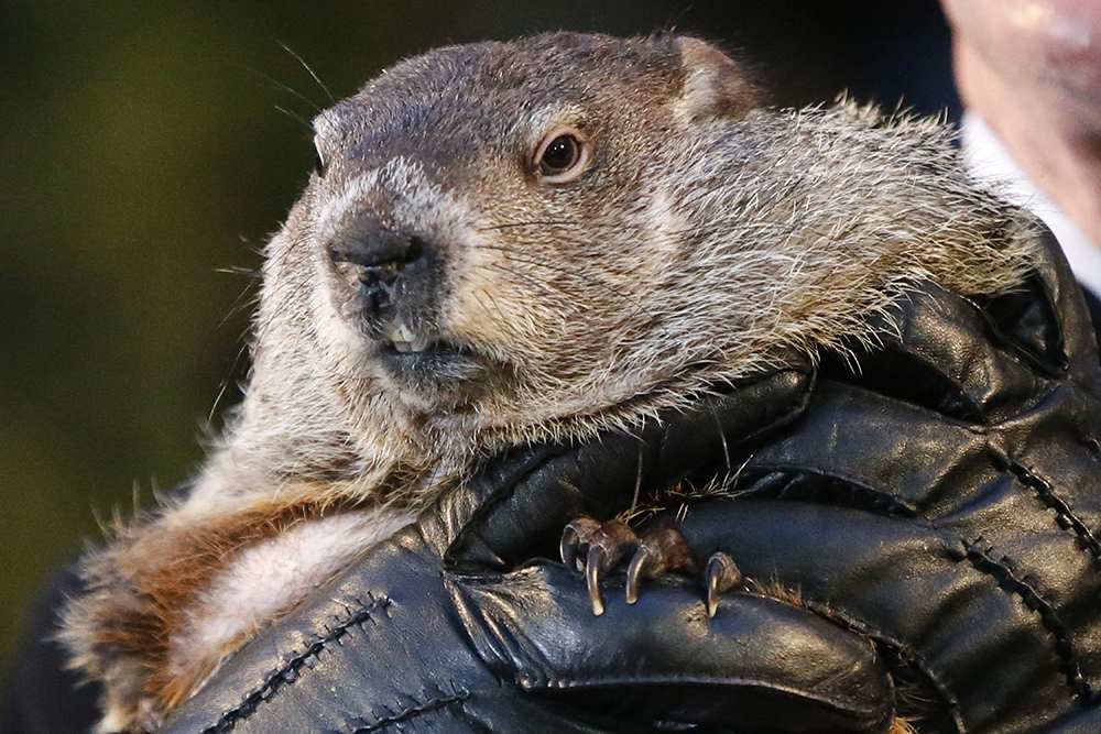 Five Fun Facts About Groundhog Day