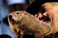 6 things you didn't know about Groundhog Day