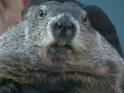 Groundhog 'predicts' early spring