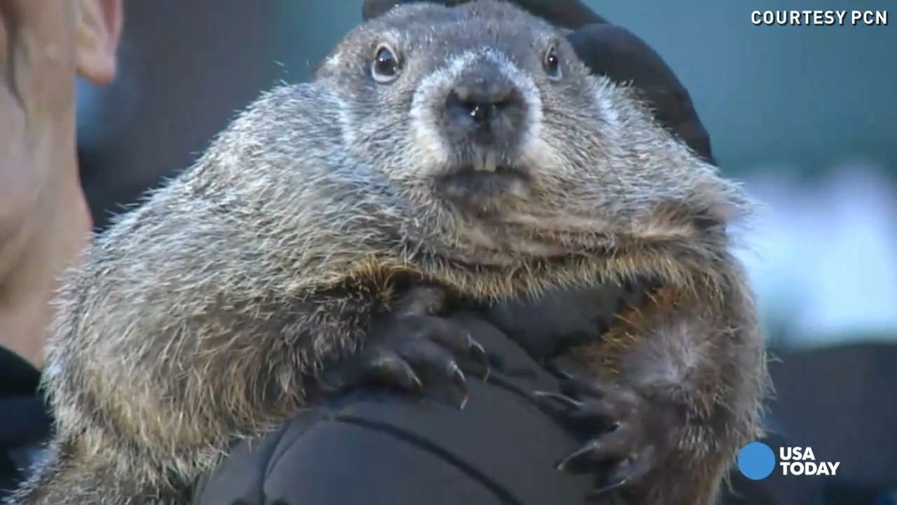 Uncategorized Groundhog Day Videos the best scenes from groundhog day