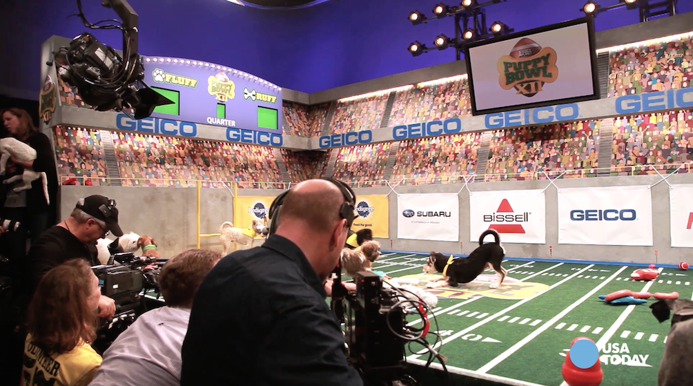 Go behind the scenes at Puppy Bowl XII