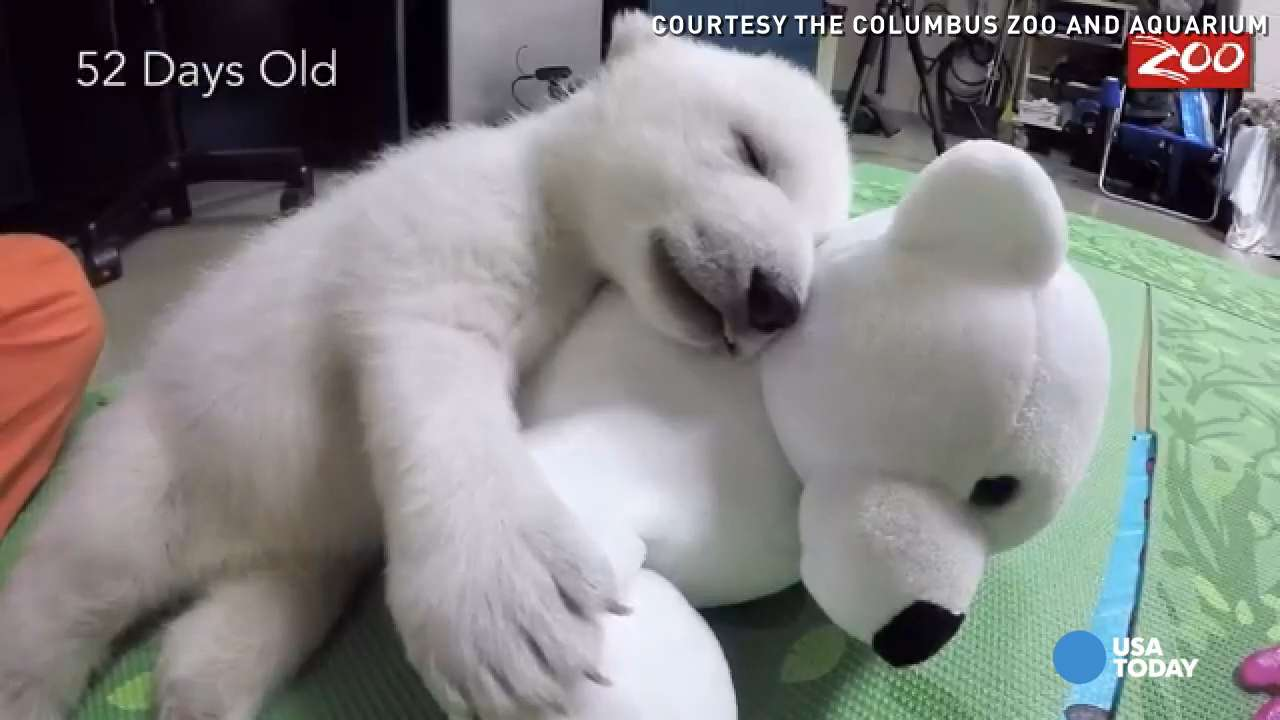 An adorable time-lapsed video of a baby polar bear shows the stages of her growing up.