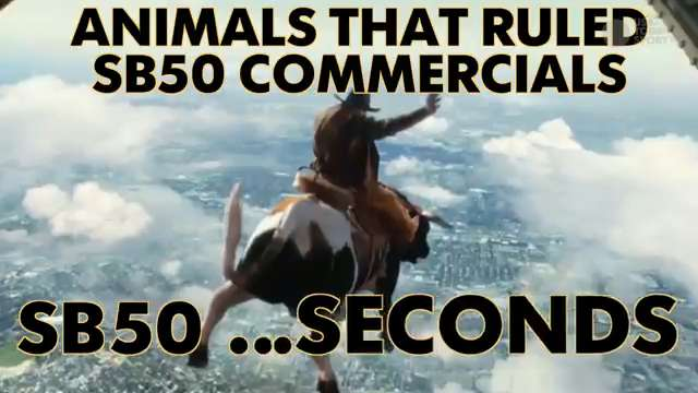 Animals that ruled Super Bowl 50 commercials.