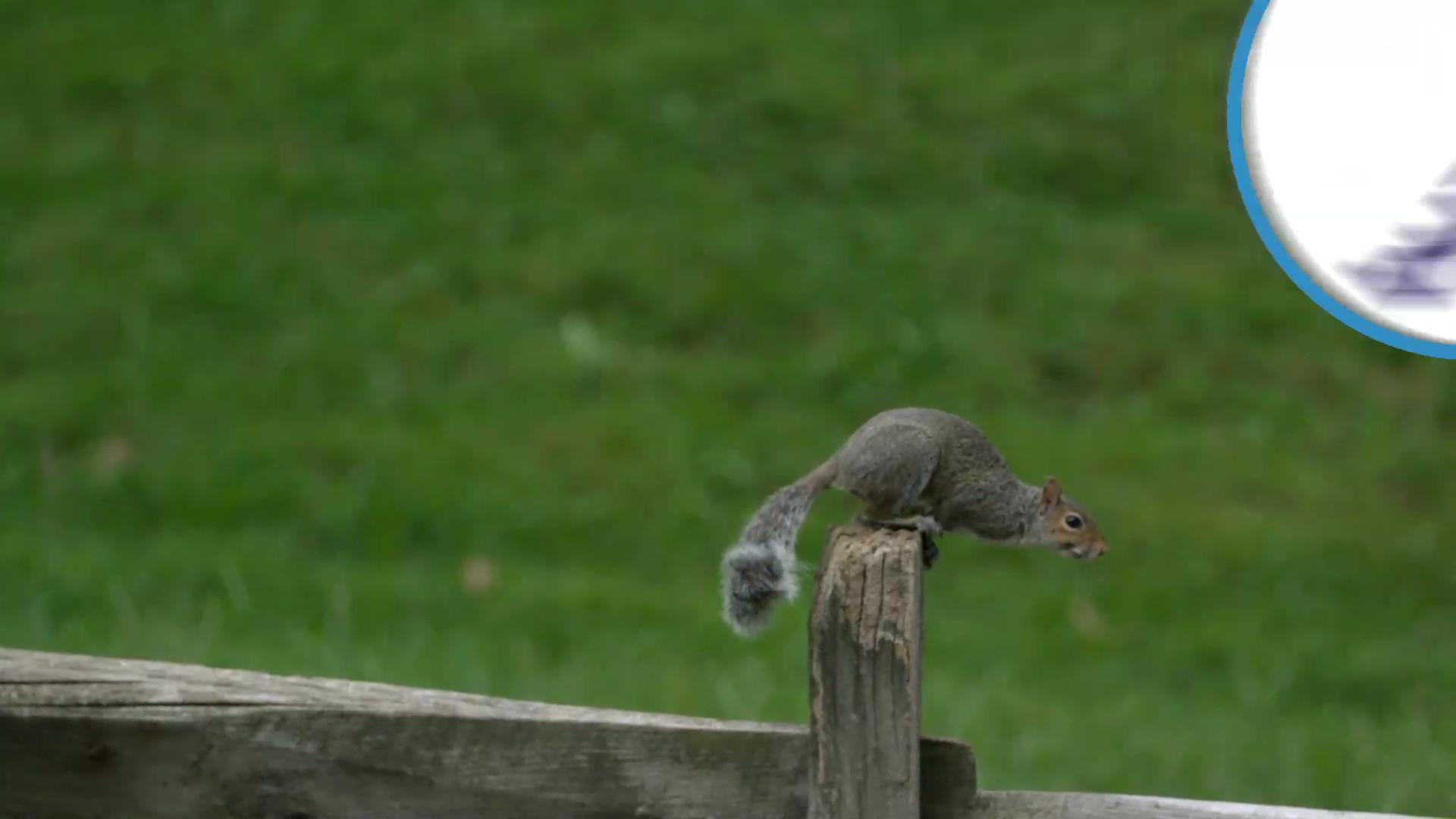Squirrel causes power outage for 5,500 people