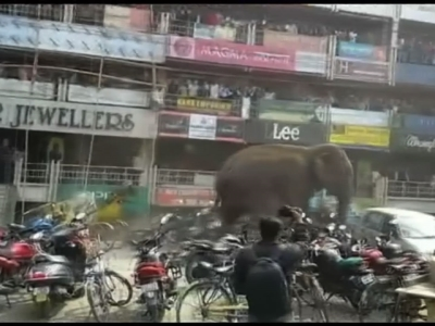 A wild elephant rampaged through an eastern Indian town on Wednesday, smashing homes and sending frightened residents running. (Feb. 10)