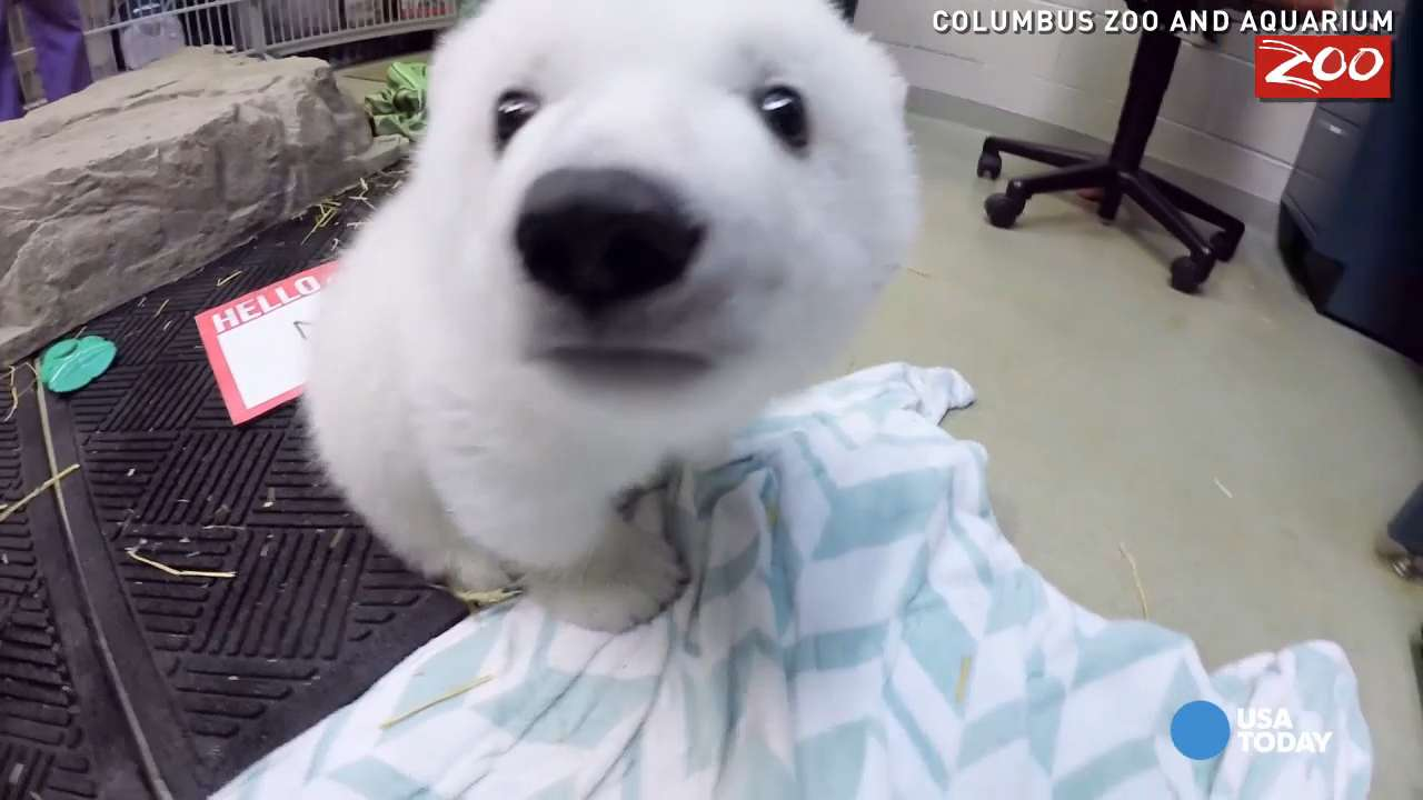 A public vote decided on a name for this three-month old polar bear cub at the Columbus zoo. Can you guess what it is?