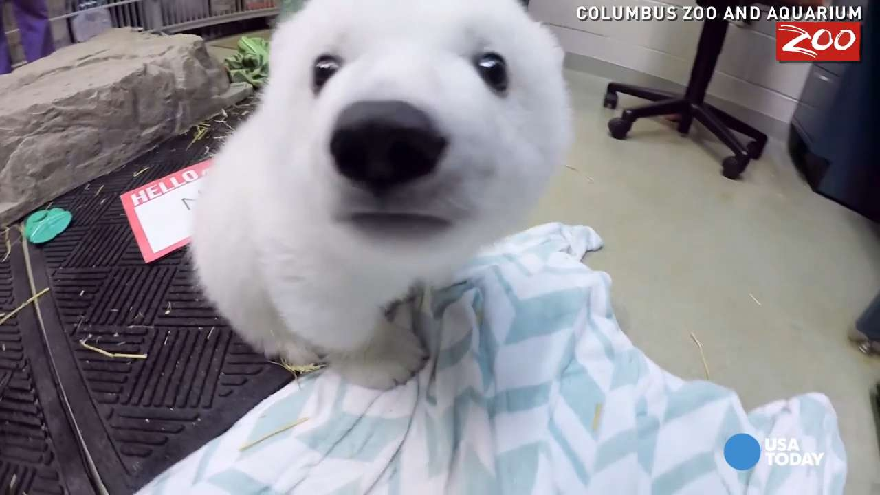 Polar bear cub with a new name just wants to play